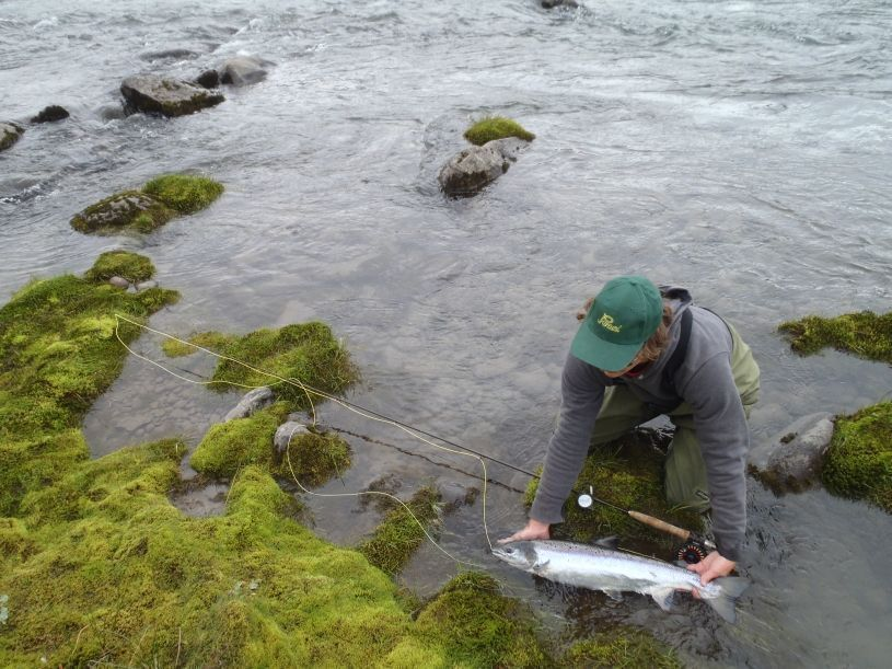 Fishing in iceland fly and spinn trips for Salmon fishing season